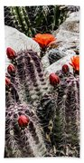 Trichocereus Cactus Flowers Beach Towel