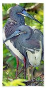 Tricolor Heron Adults In Breeding Beach Towel