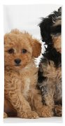 Tricolor Merle Daxie-doodle And Red Toy Beach Towel