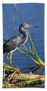 Tricolored Heron At The Pond Beach Towel