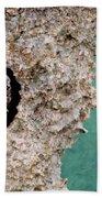 Trilobite Beach Towel