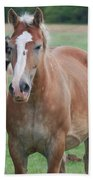 Trio Of Horses 2 Beach Towel
