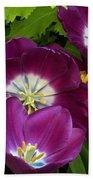 Triumph Tulips Negrita Variety Beach Towel
