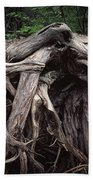 Troots Of A Fallen Tree By Wawa Ontario Beach Towel