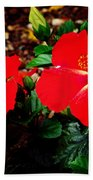 Tropical Hibiscus - Starry Wind 01a Beach Towel