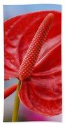 Tropical Red Anthurium Beach Towel