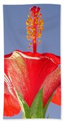 Tropical Red Hibiscus Flower Against Blue Sky  Beach Towel