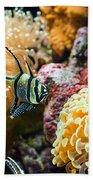Tropical Wonderland - Banggai Cardinalfish Beach Towel