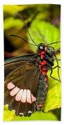 True Cattleheart Butterfly Beach Towel