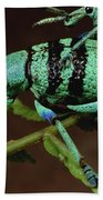 True Weevil Couple Mating Papua New Beach Towel