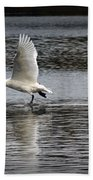 Trumpeter Swan Walking On Water Beach Towel