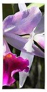 Trumpeting Purple Cattleya Orchids Beach Towel