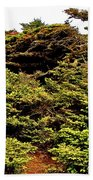 Tuckamore At Green Point Coastal In Gros Morne Np-nl Beach Towel