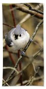 Tufted Titmouse On The Watch Beach Towel