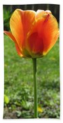 Tulip Backlit 14 Beach Towel