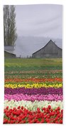 Tulip Town Barns Beach Towel