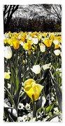 Tulips At Dallas Arboretum V26 Beach Towel