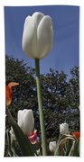 Tulips At Dallas Arboretum V36 Beach Towel