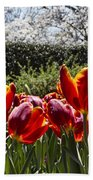 Tulips At Dallas Arboretum V41 Beach Towel