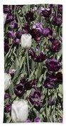 Tulips At Dallas Arboretum V43 Beach Towel