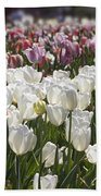 Tulips At Dallas Arboretum V52 Beach Towel