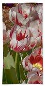 Tulips At Dallas Arboretum V53 Beach Towel