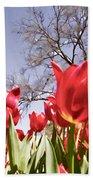 Tulips At Dallas Arboretum V62 Beach Towel