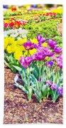Tulips At Dallas Arboretum V65 Beach Towel