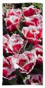 Tulips At Dallas Arboretum V70 Beach Towel