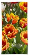 Tulips At Dallas Arboretum V71 Beach Towel