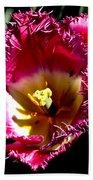 Tulips At Dallas Arboretum V77 Beach Towel