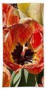 Tulips At Dallas Arboretum V81 Beach Towel