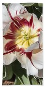 Tulips At Dallas Arboretum V91 Beach Towel