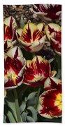 Tulips At Dallas Arboretum V93 Beach Towel