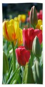 Tulips - Field With Love 22 Beach Towel