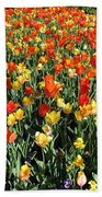 Tulips - Field With Love 50 Beach Towel