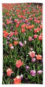 Tulips - Field With Love 55 Beach Towel