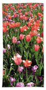 Tulips - Field With Love 56 Beach Towel
