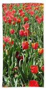 Tulips - Field With Love 61 Beach Towel