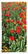 Tulips - Field With Love 62 Beach Towel