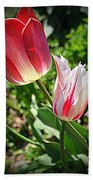 Tulips In Red And White Beach Towel