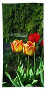 Tulips In The Spring Beach Towel