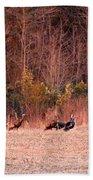 8964 - Turkey - Eastern Wild Turkey Beach Towel