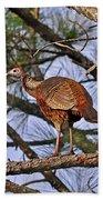 Turkey In A Tree Beach Towel by Al Powell Photography USA