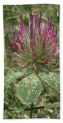 Turkish Rose Clover Beach Towel