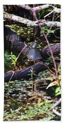 Turtle In The Glades Beach Towel