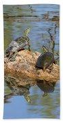 Turtles On Stump Beach Towel