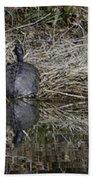 Turtles Sunning On Bank Beach Towel