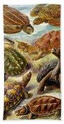 Turtles Turtles And More Turtles Beach Towel