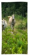 Two Appaloosa Horses  Beach Towel